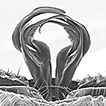 Cave millipedes of the United States. ...