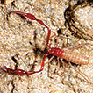 Cave-dwelling pseudoscorpions of China ...